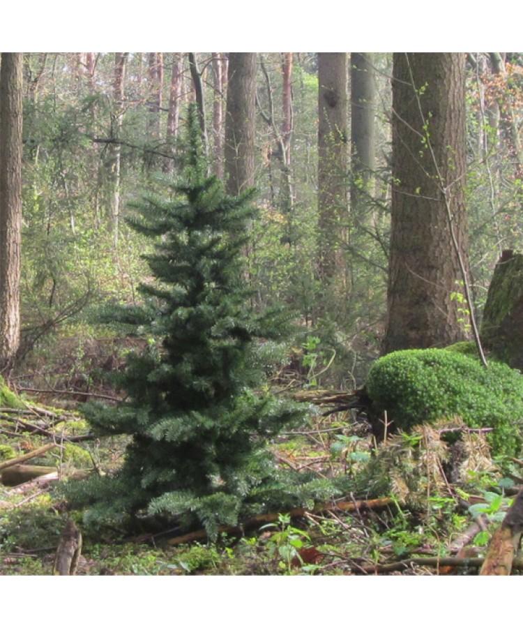Luxury-Tree-Natural