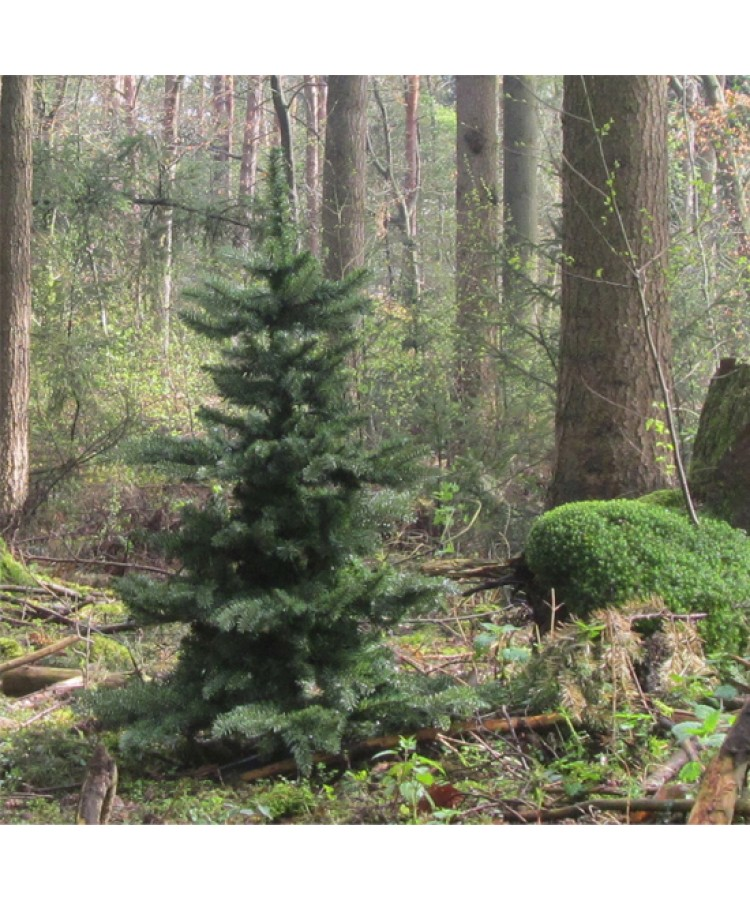 basic-tree-180cm-natural